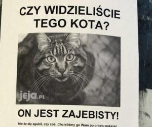 Widzieliście tego kota?