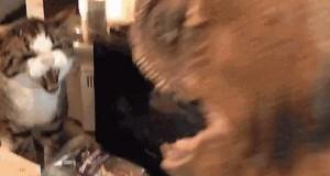 Kot vs Dinozaur