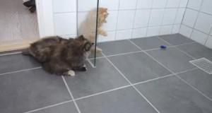 5 kociaków i mały robot