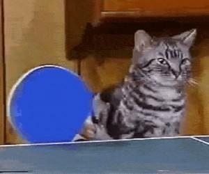 Koci ping pong