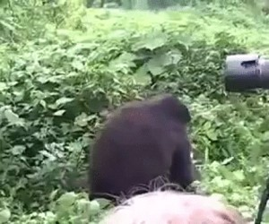 Goryl delikatnie przypomina, że w każdej chwili może Cię zabić