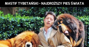 Najdroższy pies świata