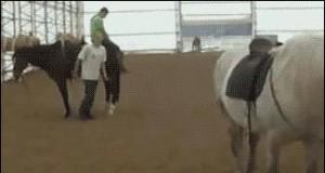 Nie podchodź do konia od tyłu