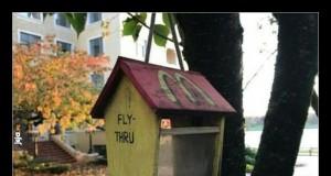 McDonald's dla ptaków