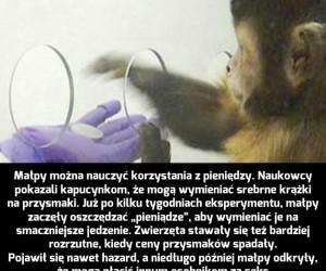 Przedsiębiorcze małpy