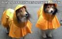 Płaszcze przeciwdeszczowe dla psów