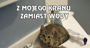 Z mojego kranu zamiast wody chyba ciekną koty