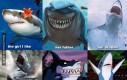 Rodzina rekinów