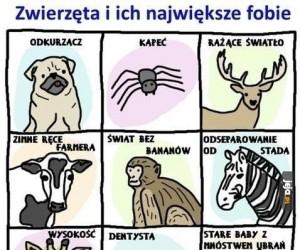 Zwierzęta i ich największe fobie