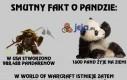 Smutny fakt o pandzie...