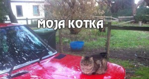 Moja kotka