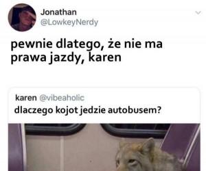 O kojocie, który jeździł autobusem