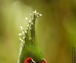 Majestatyczny ptak jest majestatyczny