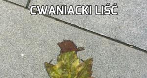 Cwaniacki liść