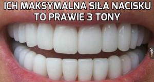 Przed państwem ludzkie zęby!
