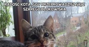 Radość kota, gdy przeprowadzisz się z szarego blokowiska