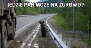 Jedzie pan może na Żukowo?