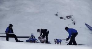 Snowboard nie jest tylko dla ludzi