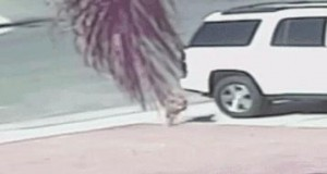 Bohaterka kotka broni dziecko przed psem