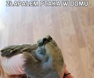 Złapałem ptaka w domu