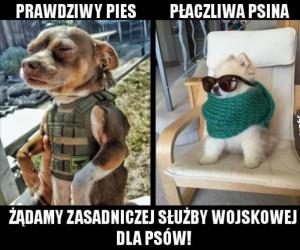 Psy do wojska!