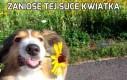 Zaniosę tej suce kwiatka