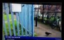 Telewizja BBC postanowiła ukryć tożsamość wrony, która weszła w kadr