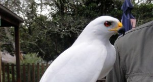 Dostojny ptak jest dostojny