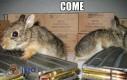Już do was lecę, króliczki!
