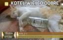 Koteł wie, co dobre