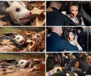 Kim i przerażony opos