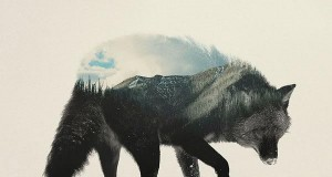 Leśne zwierzęta
