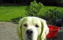Pies vs skoszona trawa