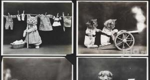 Zdjęcia zwierzaków z przeszłości