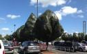 Nieodpakowane drzewa