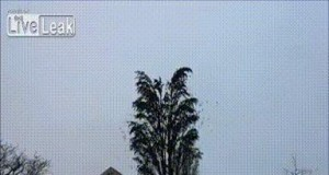 Coś chyba jest na drzewie...