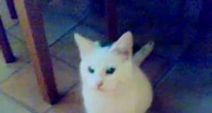 Kot mówi mama