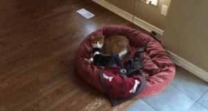 To moje łóżko, wypad!