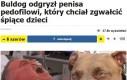 W Polsce psa by uśpiono, a okaleczonej ofierze przyznano odszkodowanie