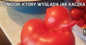 Pomidor, który wygląda jak kaczka