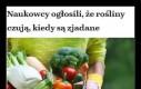 Szach-mat, wegetarianie i weganie