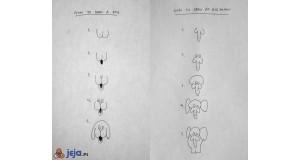 Instrukcja rysowania zwierząt