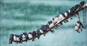 Ptaki lubią się przytulać, gdy im zimno