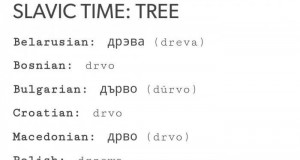 Słowiańskie drzewo