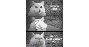 Zwykły kot vs luksusowy kot