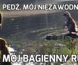 Pędź, mój niezawodny aligatorze!