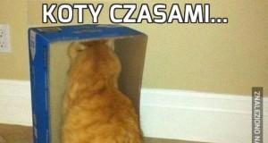 Koty czasami...