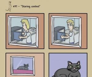 Głupie koty?