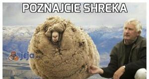 Poznajcie Shreka