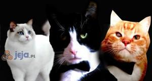 007 koteł, zgłoś się